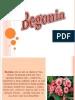 Begonia.pptx