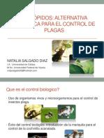 Control Biologico Diaphorina Natalia Salgado Diaz