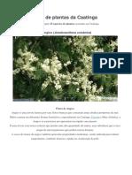 Lista de Plantas Da Caatinga