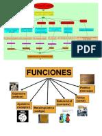 Organigrama de Comunicacion y Lenguaje