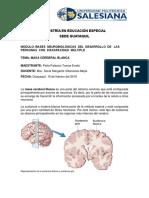Materia Cerebral Blanca