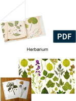 herbarium denise de kort ta2a