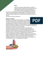 Clasificación de Los Bienes y Clasificacion de Servicios Con Imagenes y Definicion