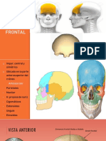 Anatomia Huesos Del Craneo