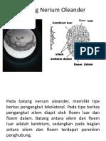 Batang Nerium Oleander.pptx