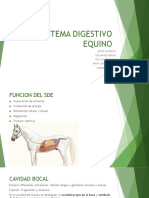SISTEMA DIGESTIVO EQUINO (1).pptx