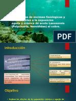 Respuestas de enzimas fisiológicas y antioxidantes a la exposición aguda y crónica de acuta Laeonereis(Polychaeta, Nereididae) al cobre