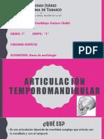 ATM Morfologia