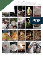Infografía hongos en Colombia