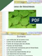 Proceso de Fotosintesis