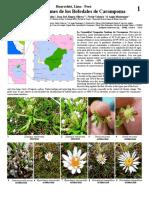 Plantas Comunes de Carampoma - Huarochiri
