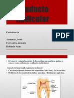 Conducto Radicular