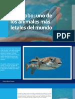 CARLOS MICHEL FUMERO -Pez Globo. Uno de Los Animales Más Letales Del Mundo.