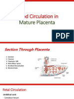 Blood Circulation in Mature Placenta