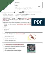 TERCERA PRUEBA MENSUAL  DE CIENCIAS NATURALES adaptada permanentes.docx