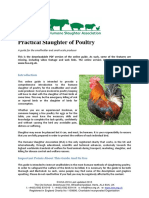 Practical Slaughter of Poultry by the Humane Slaughter Association