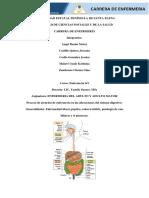Anatomía Del Sistema Digestivo