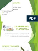 La Membrana Plasmática Presentacion