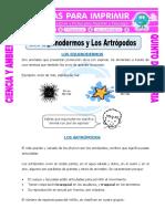 EQUINODERMOS Y ARTROPODOS.pdf