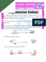 ORGANIZACION CELULAR.pdf