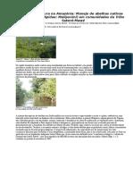 A Meliponicultura Amazônia, Tribo Sateré-Mawé 2