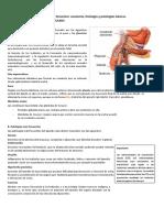 Anexo_Aparato_genital_AnatomIa_fisiologIa_y_patologIas.docx