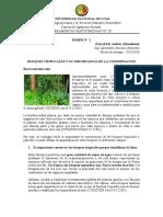 Bosques Tropicales y Su Importancia de La Conservacion