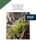 Plant Form.docx