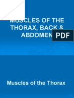 Muscles of the Thorax Back Abdomen