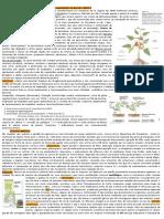 Resumo p2_FisioVegII