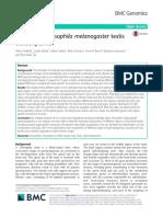 Analysis of Drosophila Melanogaster Testis