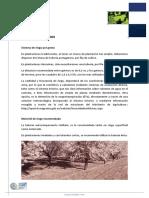 Almendro_CultivoRegaber_V01