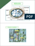 IB filminas de clase sin color 18.pdf