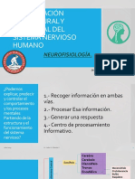 SISTEMA NERVIOSO Y NEUROCONDUCCIÓN.pptx