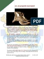 El petauro del Azucar.pdf