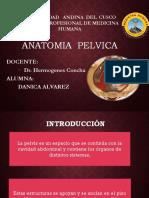 Anatomia de Pelvis