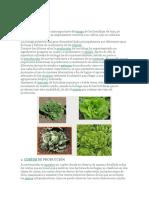 Bibliografía de hortalizas.docx