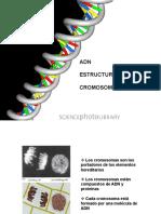 Dna Cromosomas y Genomas