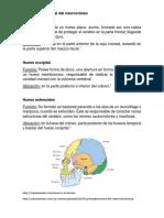 Anatomía Funcional Del Neurocráneo