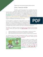 Síntesis de Proteínas-traduccion Del Adn-biología