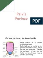 Pelvis y Perineo 2018