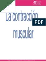 contraccion-muscular.docx