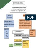 Historia Natural de La Enfermedad Mapa Conceptual