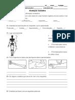 Ficha de avaliação sobre o corpo humano 4ano