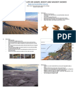 DISTRIBUTION OF LIFE ON SANDY, ROCKY AND MUDDY SHORES by Payal H. Ranerajadav
