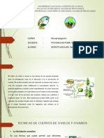 EXPO DE MICROPROPAGACION.pptx