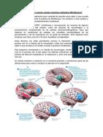 Qué Sucede en Nuestro Cerebro Mientras Realizamos Mindfulness