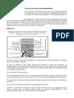 8. Guía de Manejo Antiobiticos Profilácticos en Cirugía General