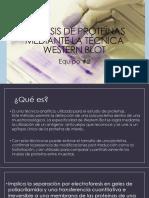 Análisis de Proteínas Mediante La Técnica Western Blot 2