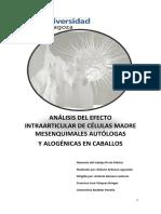stem cell equinos.pdf